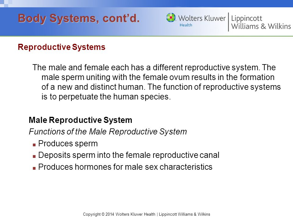 Body Systems, cont'd. Reproductive Systems