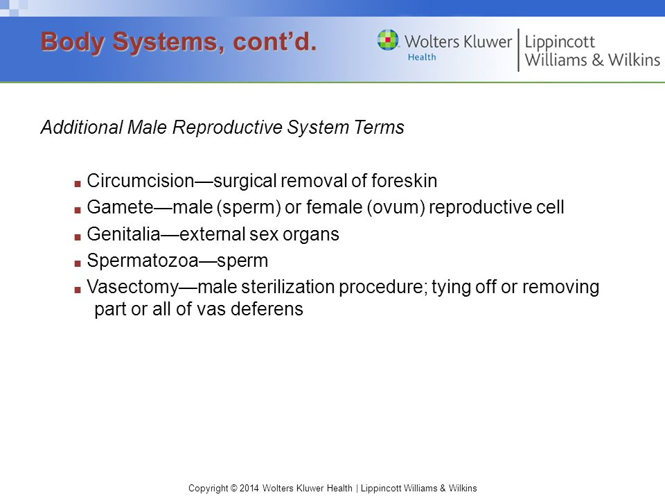 Body Systems, cont'd. Additional Male Reproductive System Terms