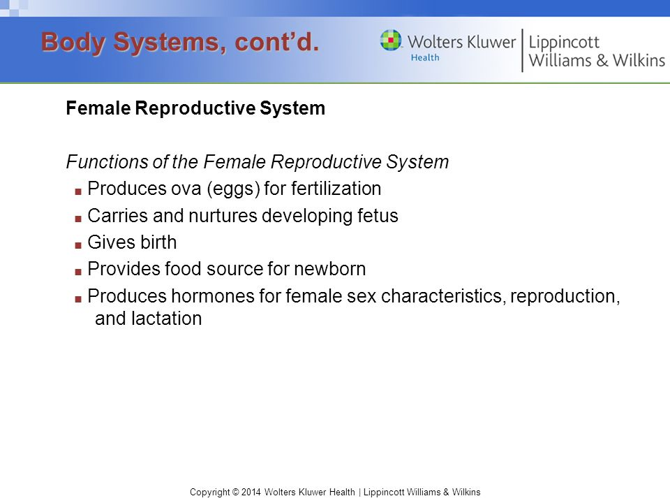Body Systems, cont'd. Female Reproductive System