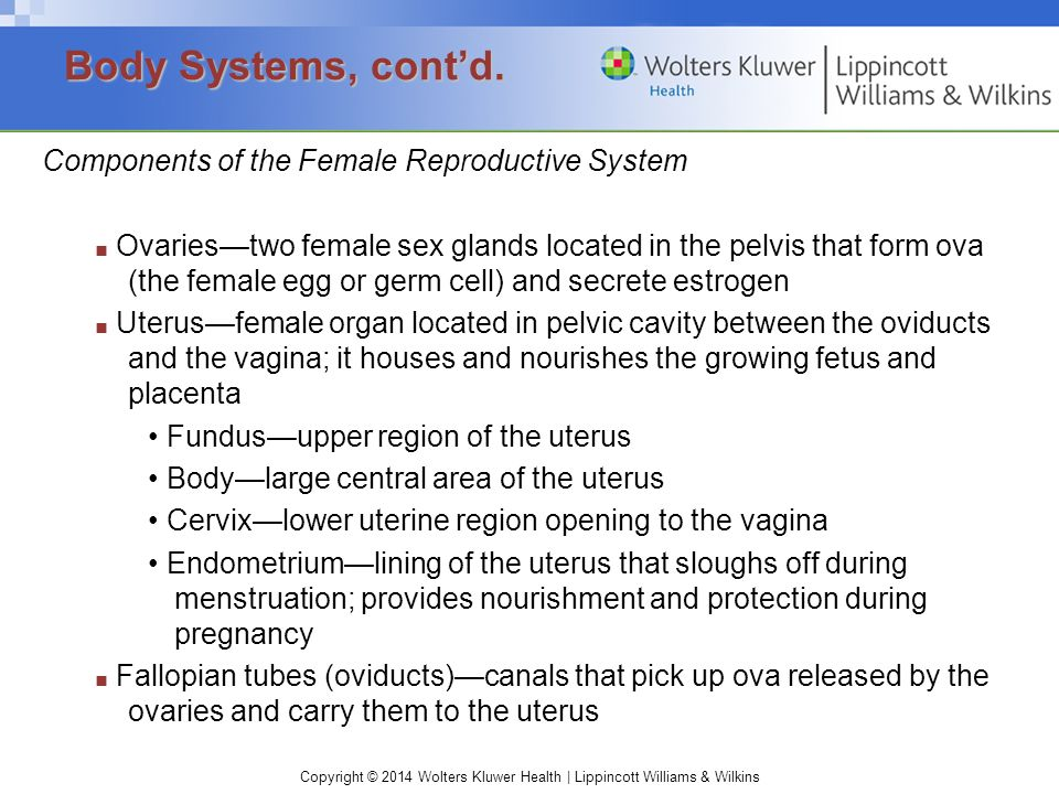 Body Systems, cont'd. Components of the Female Reproductive System