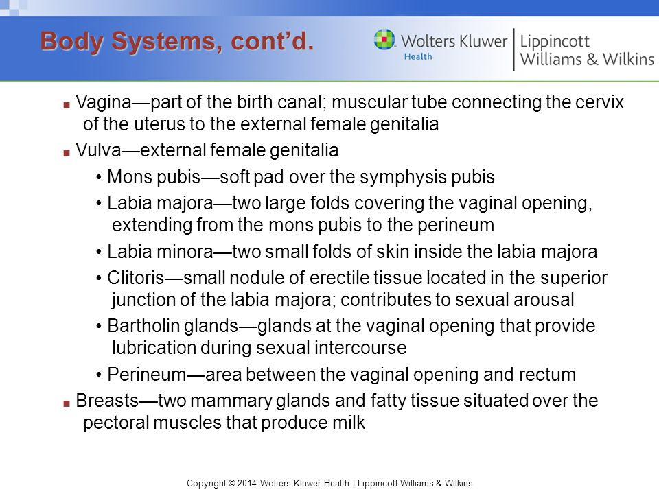 Body Systems, cont'd. • Mons pubis—soft pad over the symphysis pubis