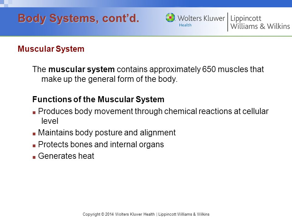 Body Systems, cont'd. Muscular System