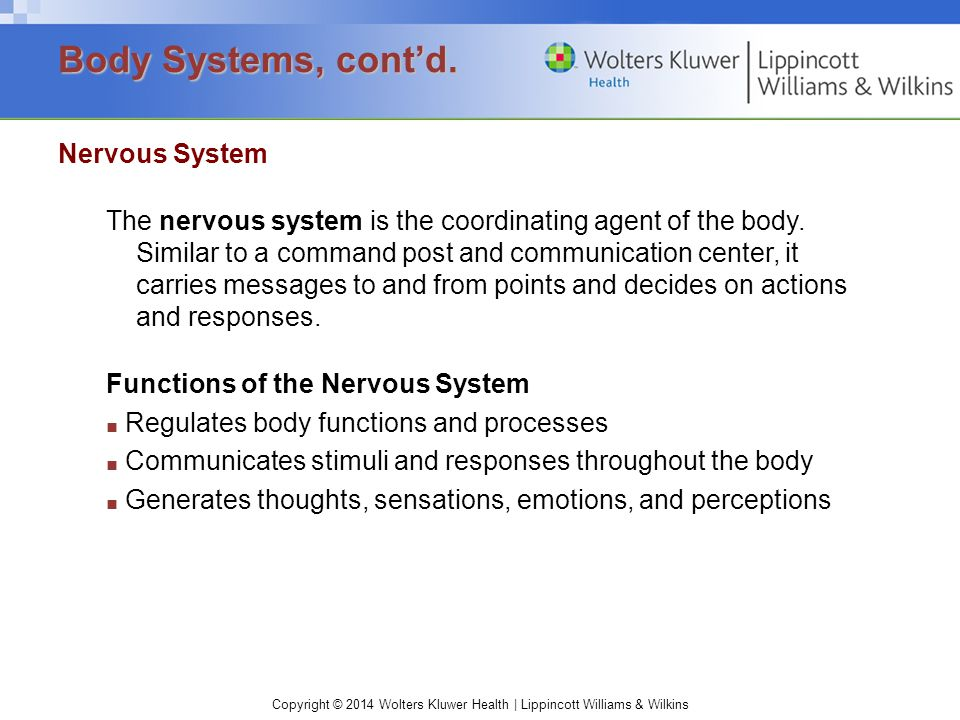 Body Systems, cont'd. Nervous System