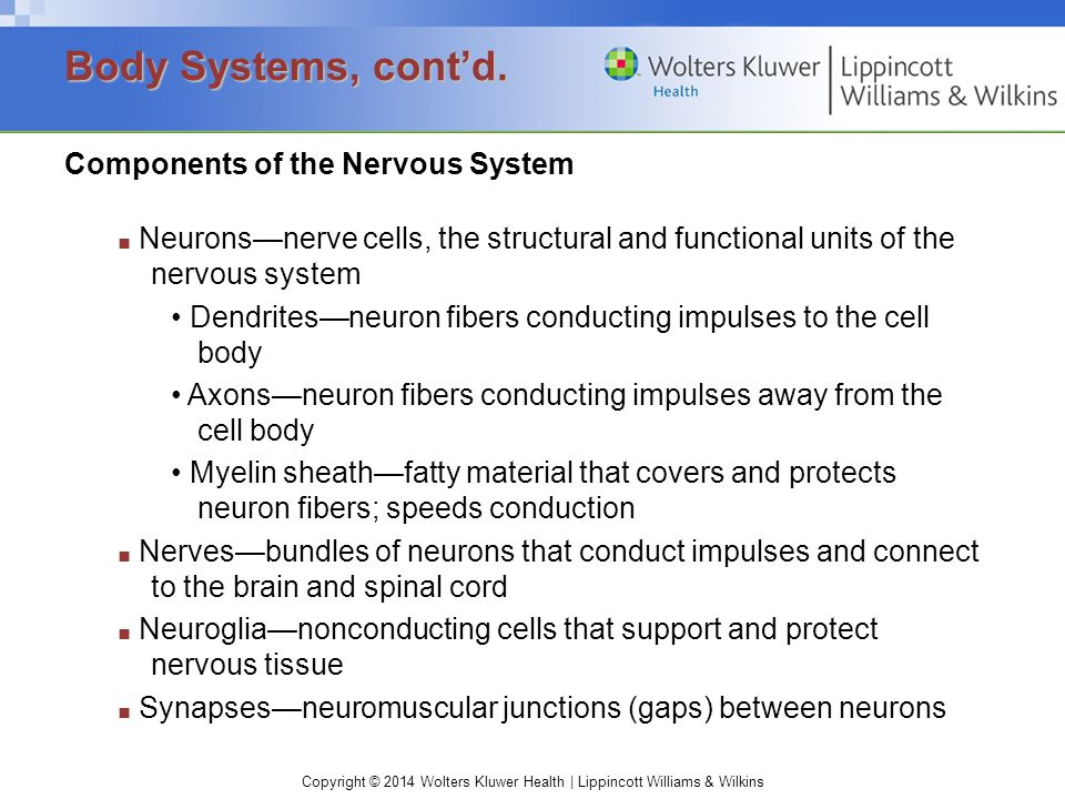Body Systems, cont'd. Components of the Nervous System