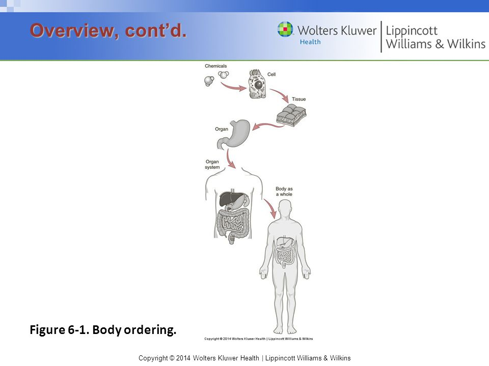 Overview, cont'd. Figure 6-1. Body ordering.