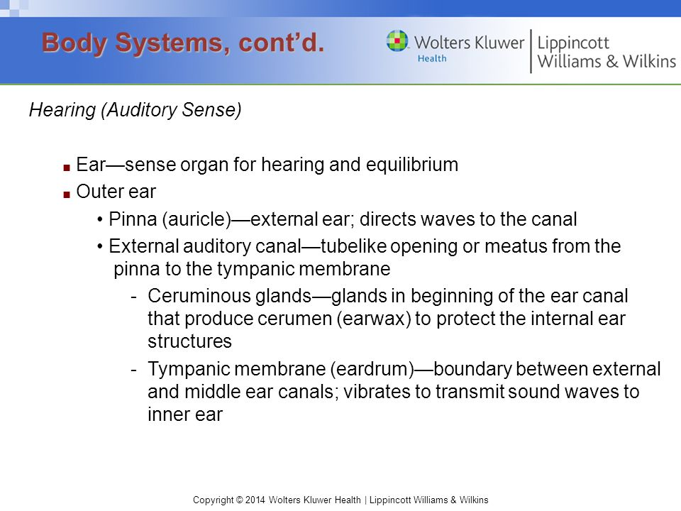 Body Systems, cont'd. Hearing (Auditory Sense)