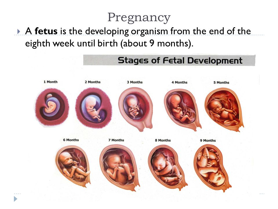 Pregnancy A fetus is the developing organism from the end of the eighth week until birth (about 9 months).