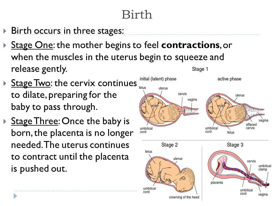 Birth Birth occurs in three stages: