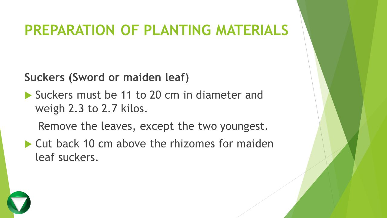 PREPARATION OF PLANTING MATERIALS