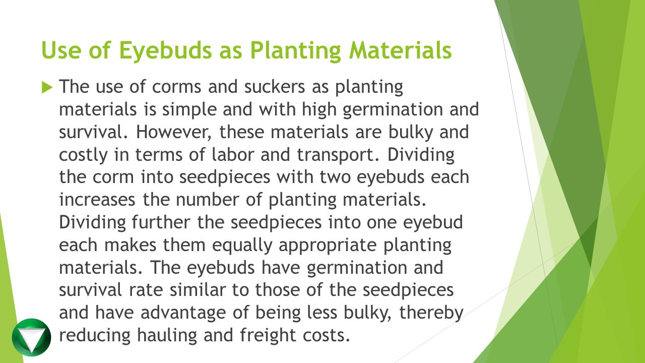 Use of Eyebuds as Planting Materials