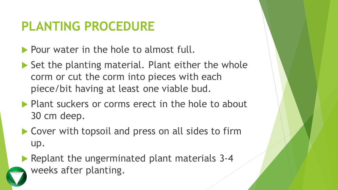 PLANTING PROCEDURE Pour water in the hole to almost full.