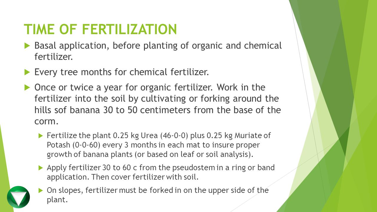 TIME OF FERTILIZATION Basal application, before planting of organic and chemical fertilizer. Every tree months for chemical fertilizer.