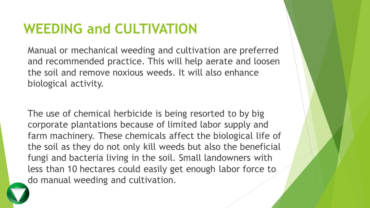 WEEDING and CULTIVATION