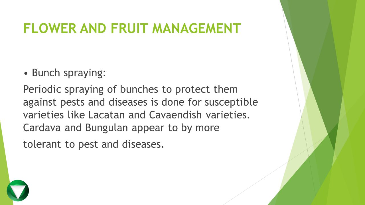 FLOWER AND FRUIT MANAGEMENT
