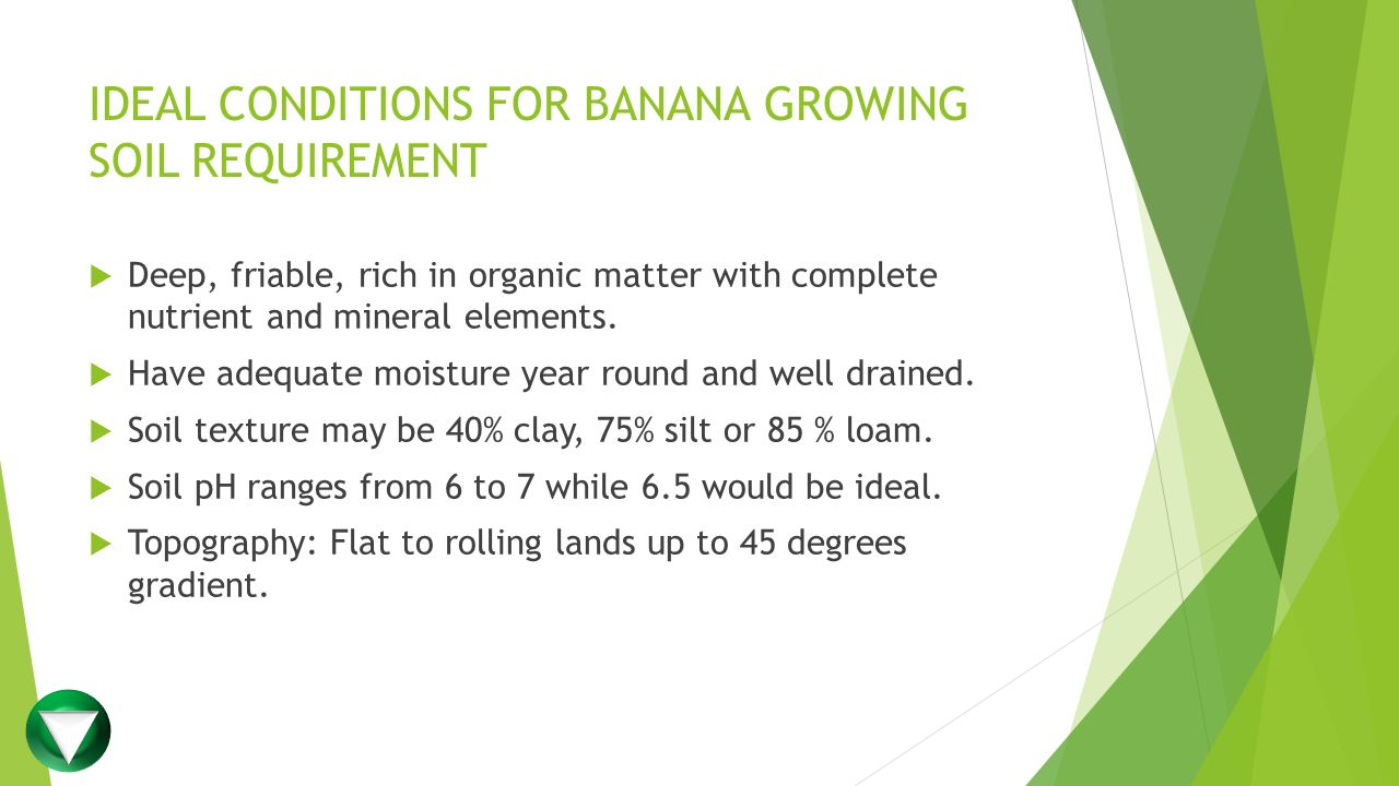IDEAL CONDITIONS FOR BANANA GROWING SOIL REQUIREMENT