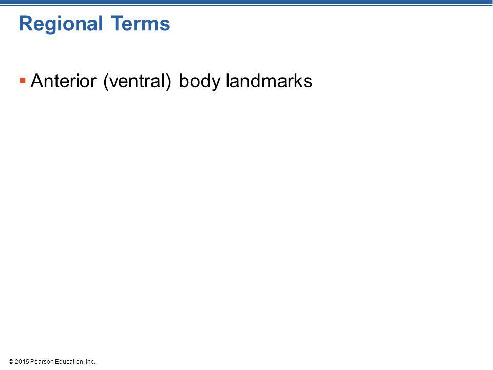 Regional Terms Anterior (ventral) body landmarks
