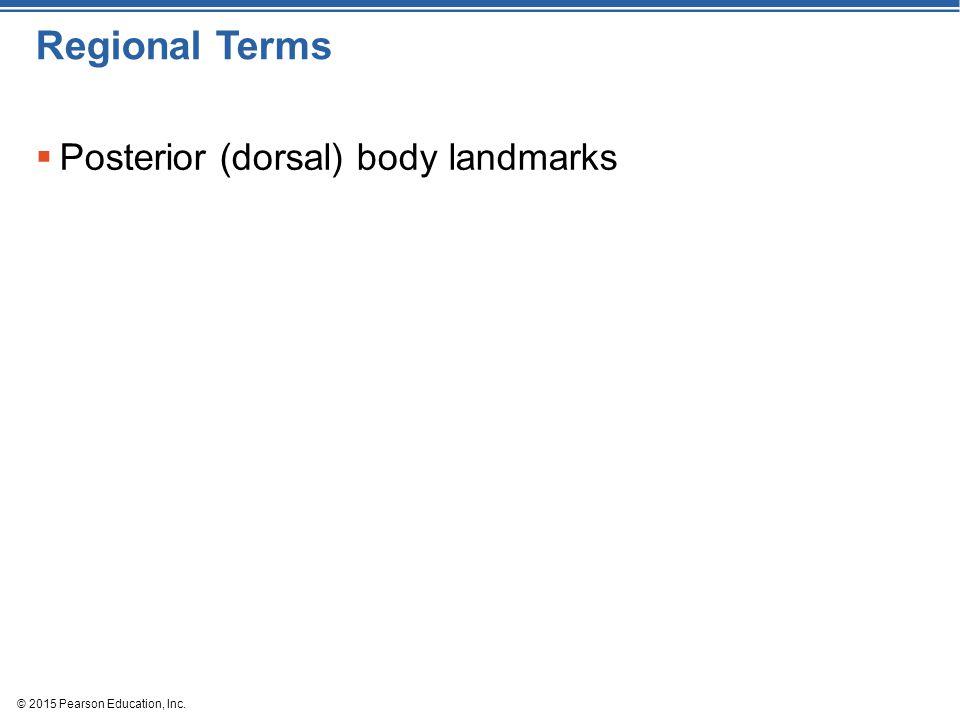 Regional Terms Posterior (dorsal) body landmarks