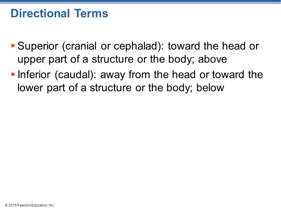 Directional Terms Superior (cranial or cephalad): toward the head or upper part of a structure or the body; above.