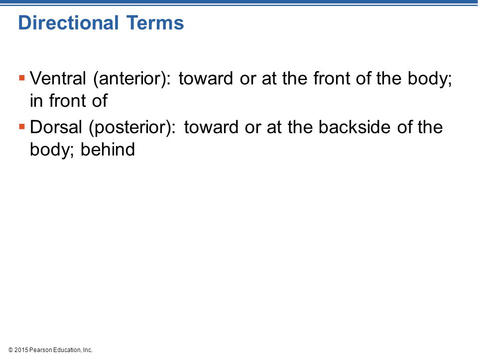 Directional Terms Ventral (anterior): toward or at the front of the body; in front of.