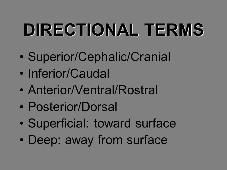 DIRECTIONAL TERMS Superior/Cephalic/Cranial Inferior/Caudal