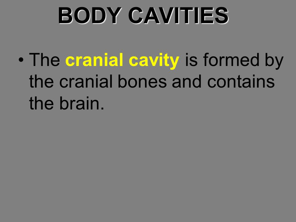 BODY CAVITIES The cranial cavity is formed by the cranial bones and contains the brain.