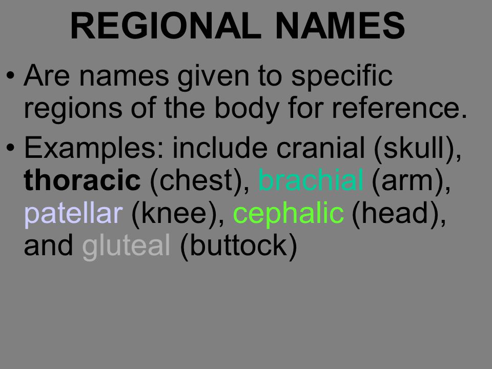 REGIONAL NAMES Are names given to specific regions of the body for reference.