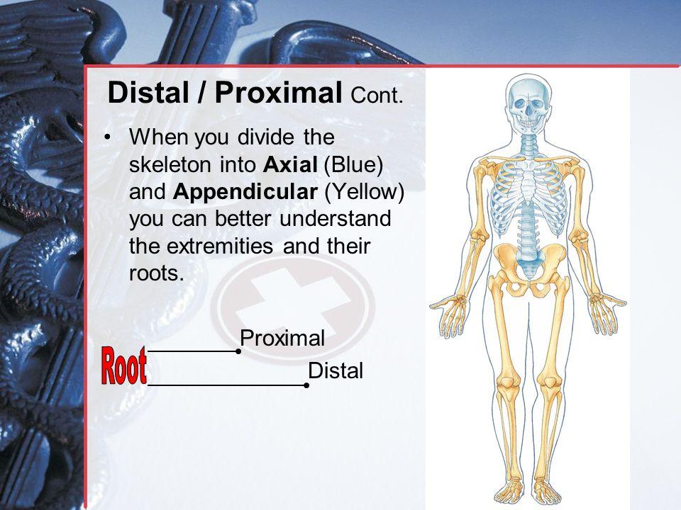 Distal / Proximal Cont.
