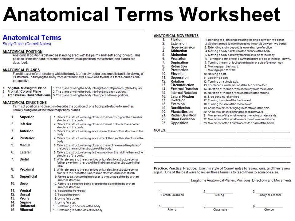Anatomy and physiology worksheets for high school