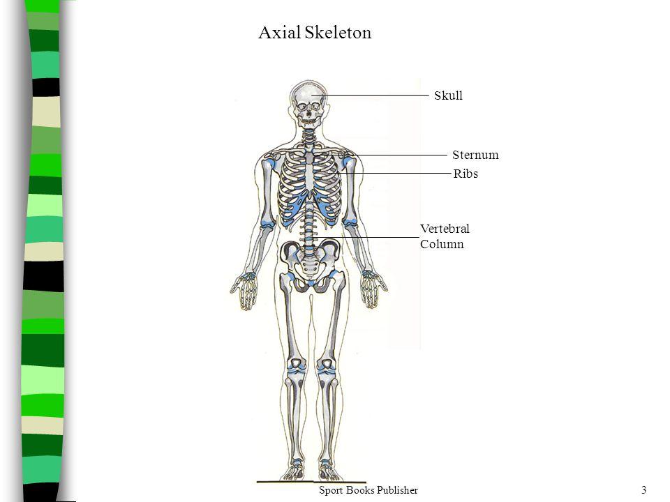 Axial Skeleton Skull Sternum Ribs VertebralColumn