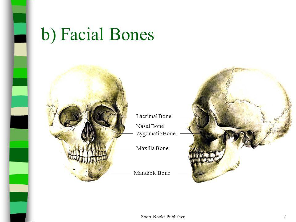 b) Facial Bones Lacrimal Bone Nasal Bone Zygomatic Bone Maxilla Bone