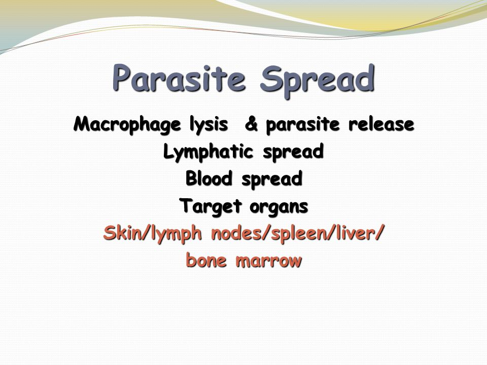 Macrophage lysis & parasite release Skin/lymph nodes/spleen/liver/