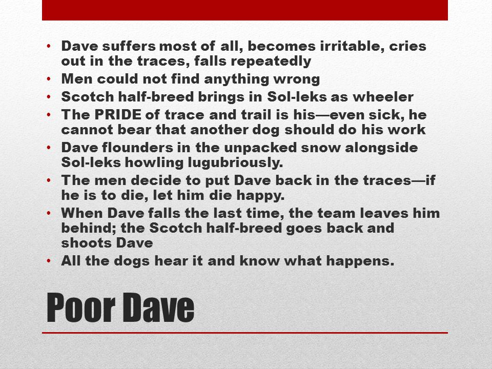 Dave suffers most of all, becomes irritable, cries out in the traces, falls repeatedly
