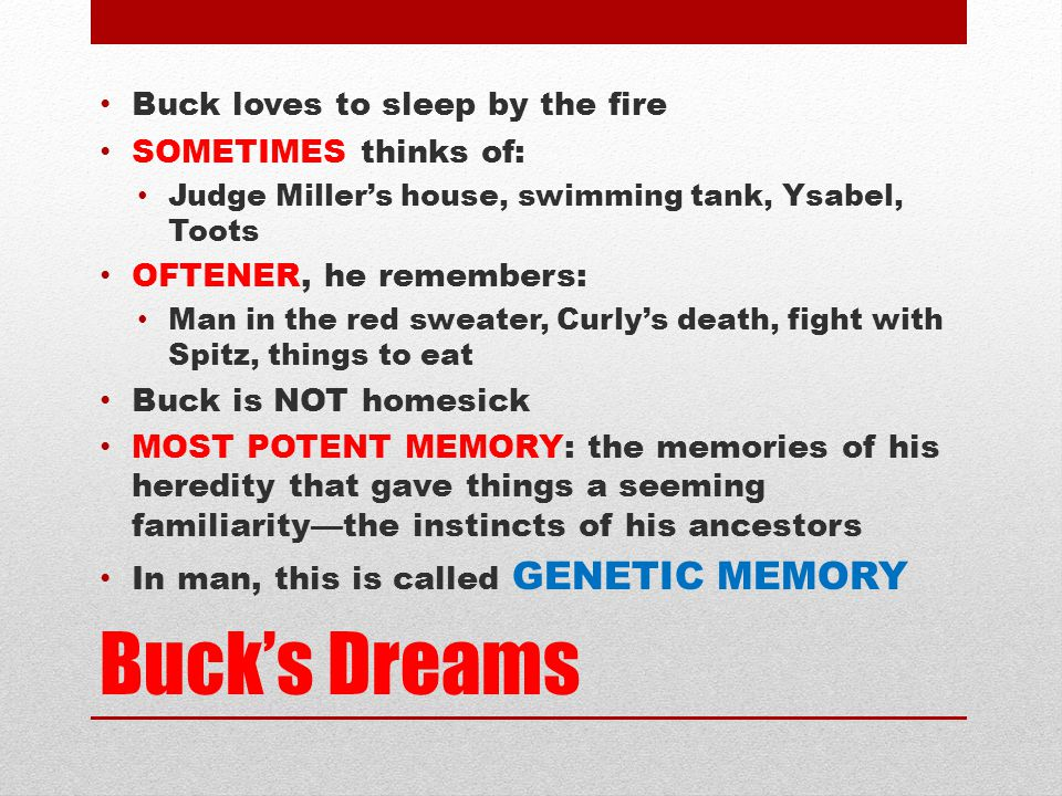 Buck's Dreams Buck loves to sleep by the fire SOMETIMES thinks of: