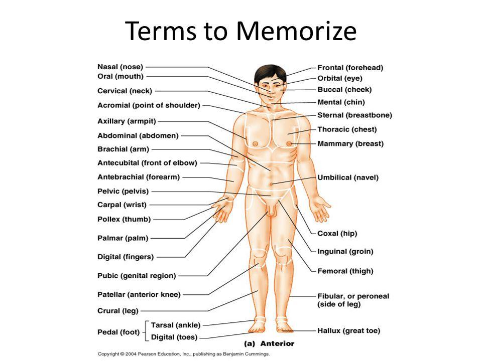 Terms to Memorize