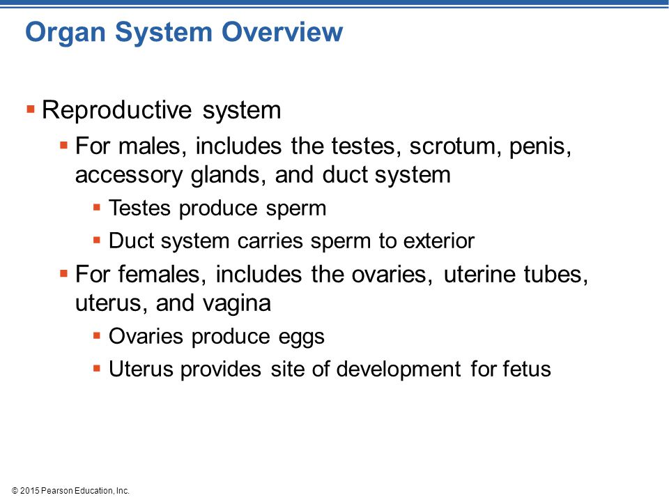 Organ System Overview Reproductive system