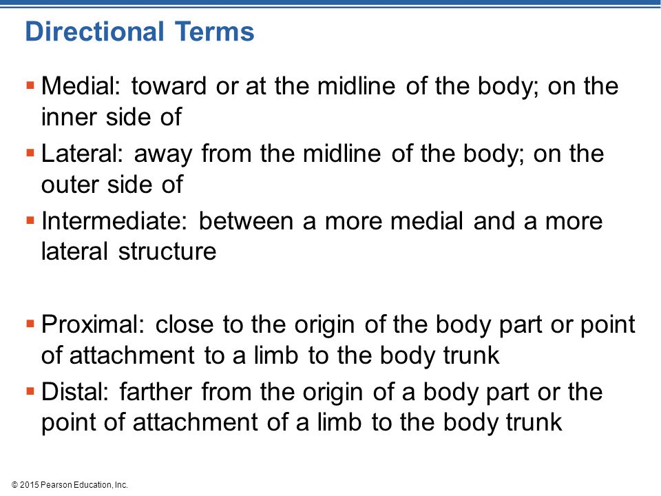 Directional Terms Medial: toward or at the midline of the body; on the inner side of.