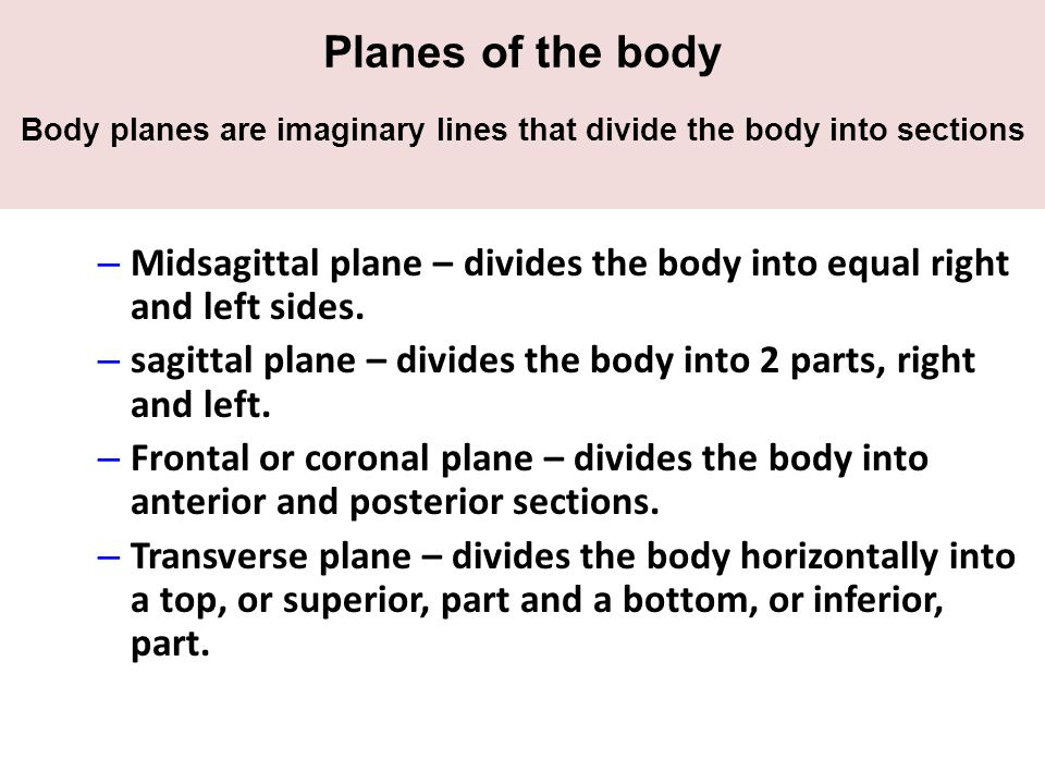 Planes of the body Body planes are imaginary lines that divide the body into sections