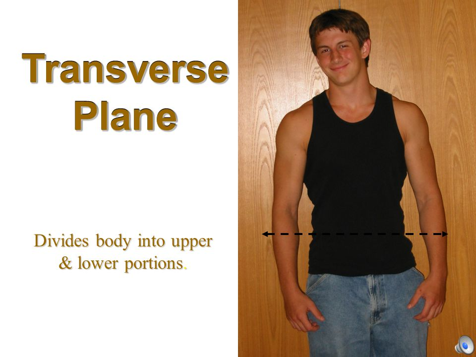Divides body into upper & lower portions.