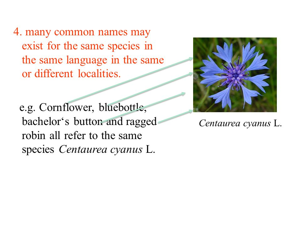 4. many common names may exist for the same species in the same language in the same or different localities.