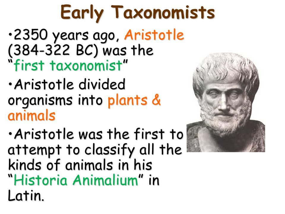 Early Taxonomists 2350 years ago, Aristotle (384-322 BC) was the first taxonomist Aristotle divided organisms into plants & animals.