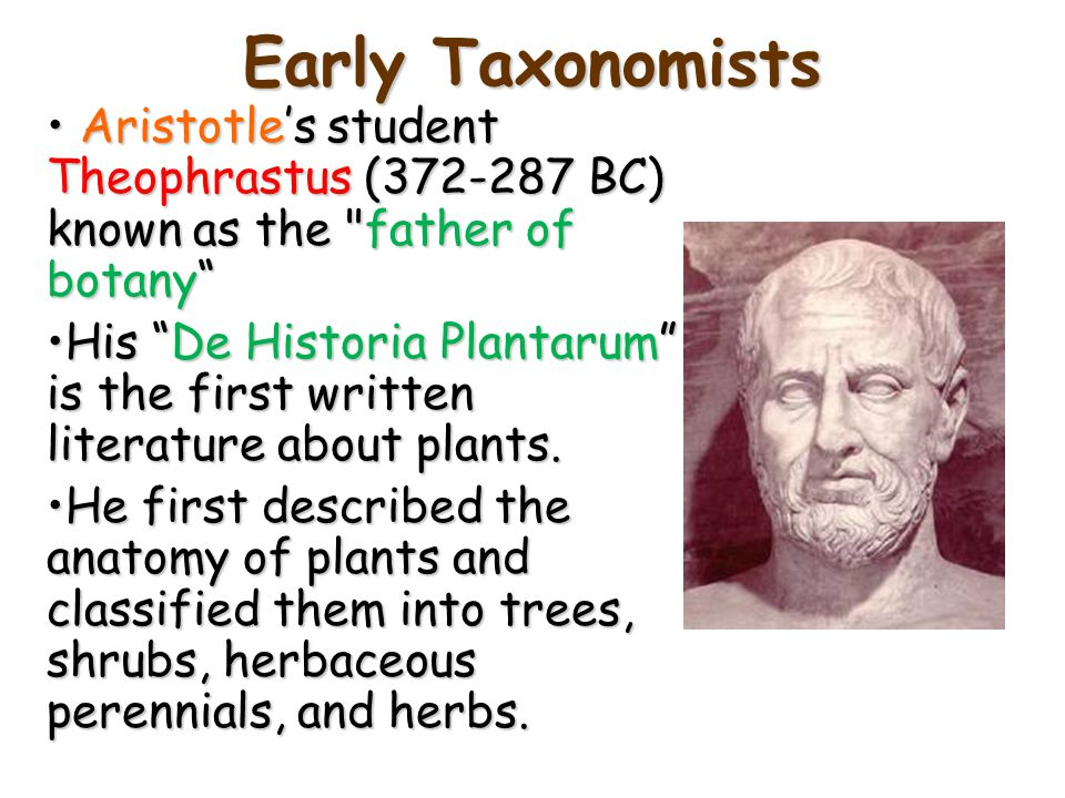 Early Taxonomists Aristotle's student Theophrastus (372-287 BC) known as the father of botany