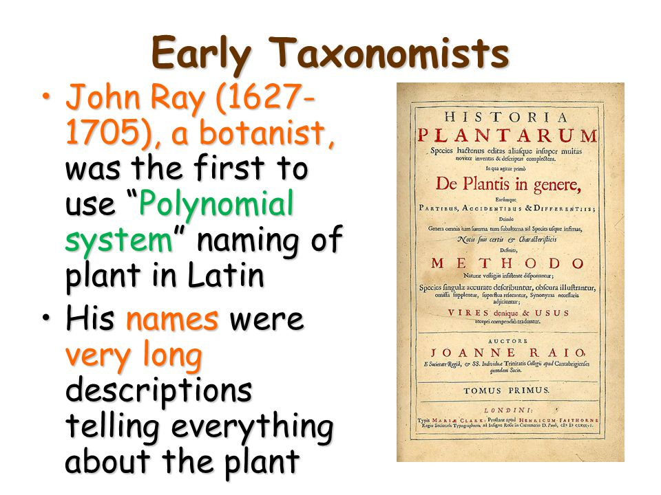 Early Taxonomists John Ray (1627-1705), a botanist, was the first to use Polynomial system naming of plant in Latin.