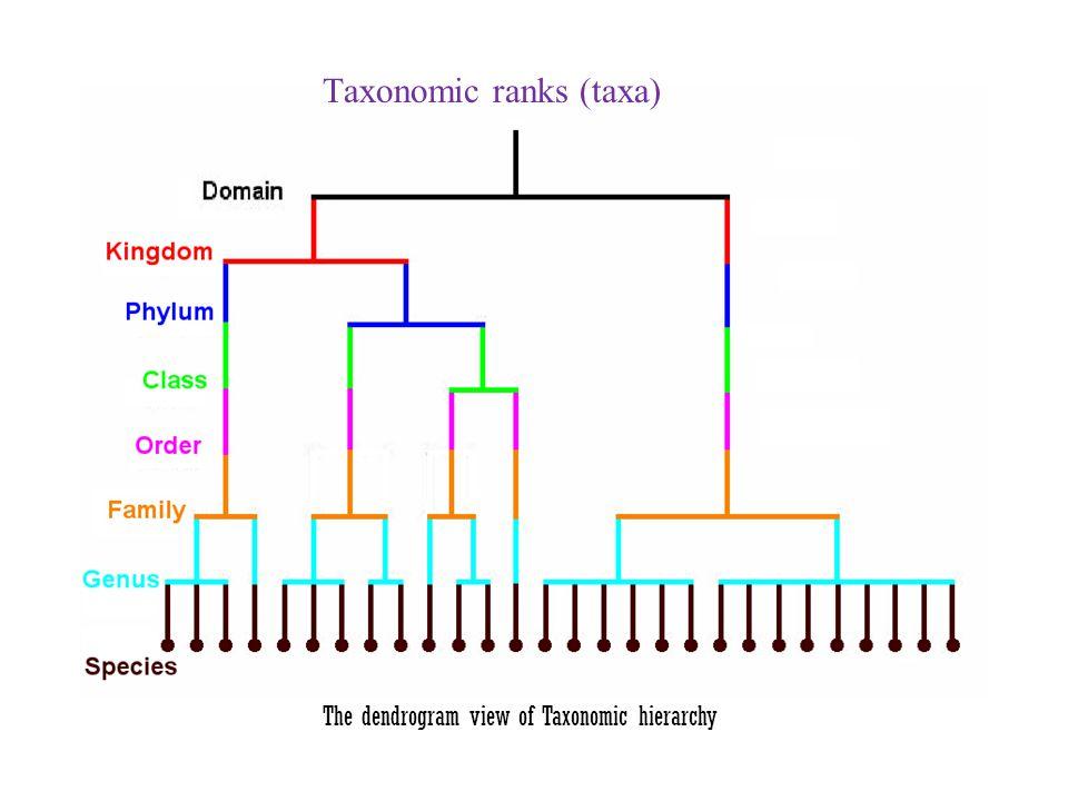 Taxonomic ranks (taxa)