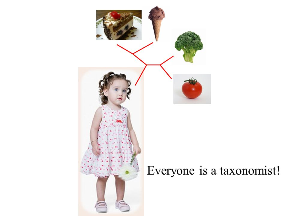 Everyone is a taxonomist!