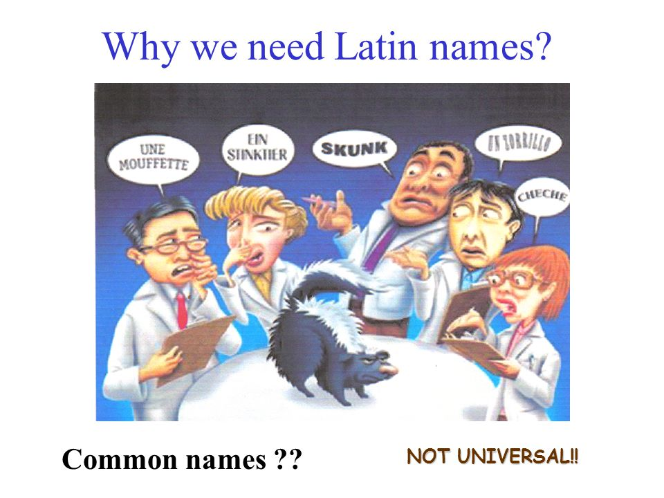 Why we need Latin names NOT UNIVERSAL!! Common names