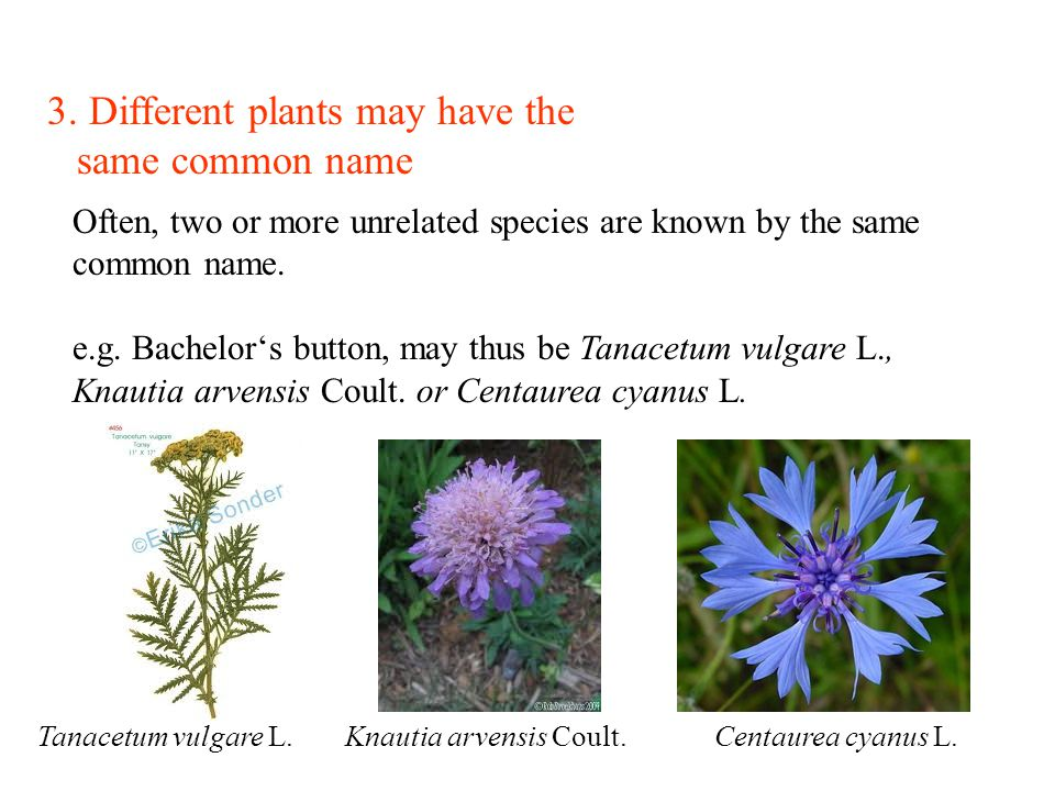 3. Different plants may have the same common name