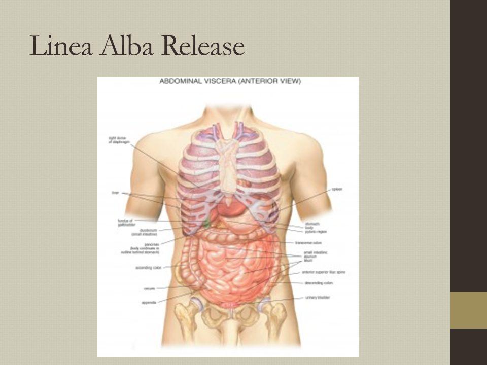Linea Alba Release
