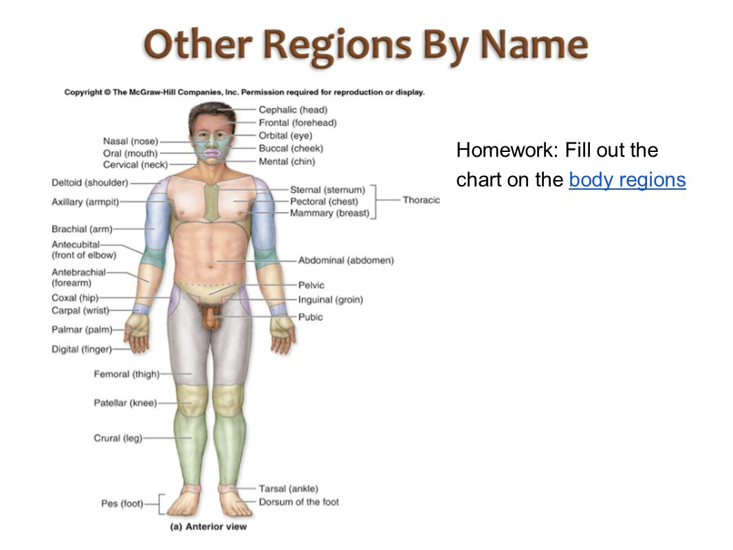 How to Learn the Body Regions