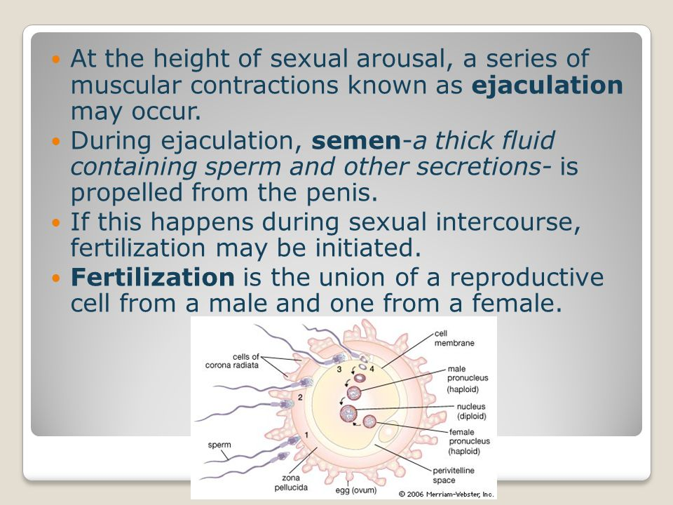At the height of sexual arousal, a series of muscular contractions known as ejaculation may occur.