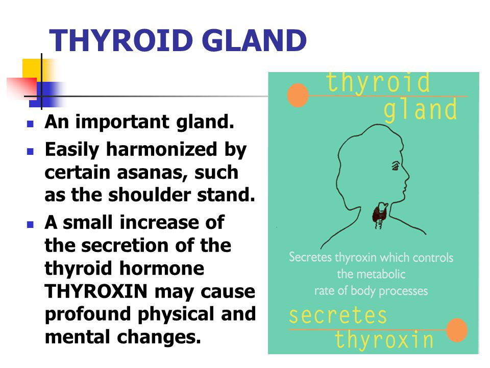 THYROID GLAND An important gland.